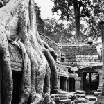 Cambodia, temple, tree, ruins, kate mccombie, photographer, melbourne
