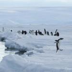 antarctica, kate mccombie, melbourne, penguins